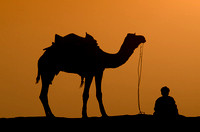 Sunset Camel and Driver, India