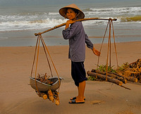 Wood Gatherer,Vietnam