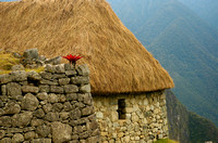 Red Flower Thatched Roof, Machu Picchu,Peru